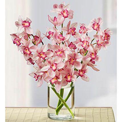 Pink Cymbidium Orchid: Orchids