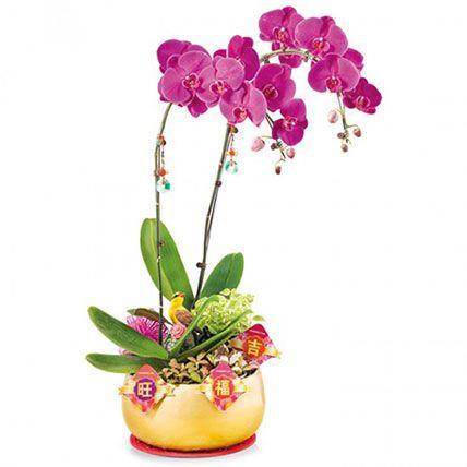 Prosperity Orchids: