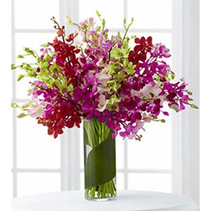 Celebration Orchids